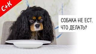 Собака не ест. Что делать?