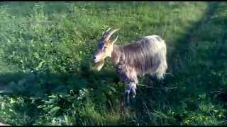 уничтожитель коз hardcore