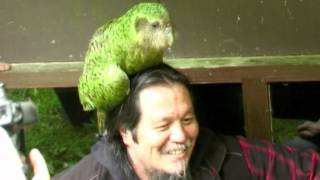 Sirocco the Kakapo is coming to Maungatautari from 19th August to 26 September 2012