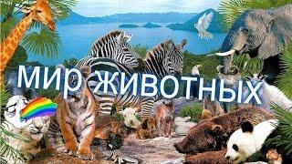 новая заставка для программы мир животных
