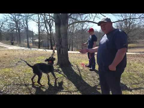 Coon Dog Training Week 2