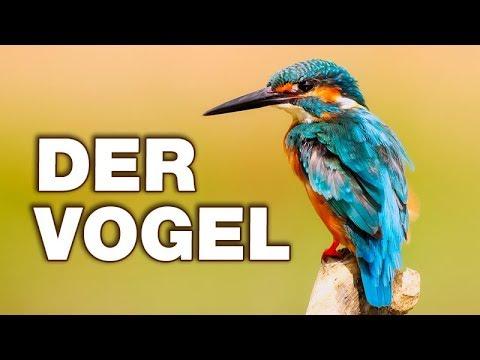 Der Vogel - Anatomie und Biologie | Alternative Fakten fürs Referat ...
