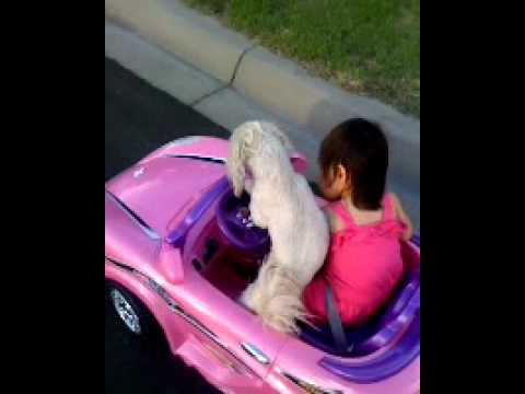 Dog driving baby's car
