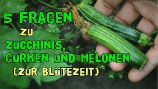 Die 5 häufigsten Fragen zu Zucchinis, Gurken und Melonen zur Blütezeit