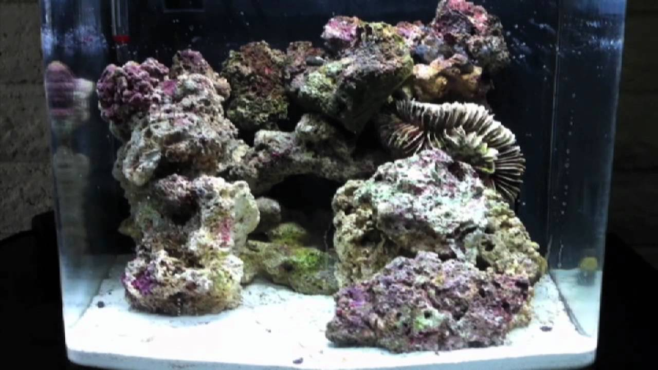 Biocube 14 gallon aquascape nano saltwater reef tank ...