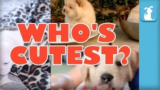 WHO'S CUTEST? YOU DECIDE! - Which Puppy Is Cutest? (Episode 1)