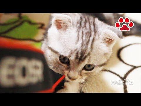 canonなんて食ってやる仔猫アリス-alice-playing-with-strap【瀬戸のアリス日記】