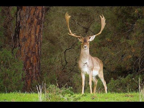 """MONTERIA in """"CERRO MUNUERA"""" (Hunting Estate)"""