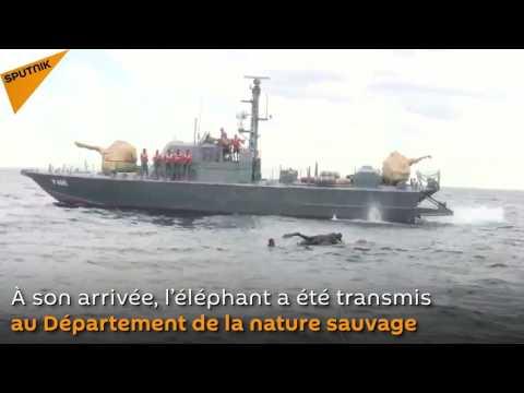 Un sauvetage incroyable: la marine du Sri Lanka sauve un éléphant