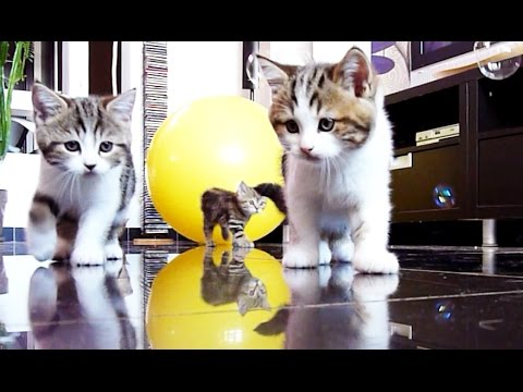 Cute Kittens confused by soap bubbles