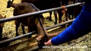 Fromages de chèvre de la Loire
