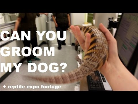 CAN YOU GROOM MY DOG? (Walking My Skink Around Town)