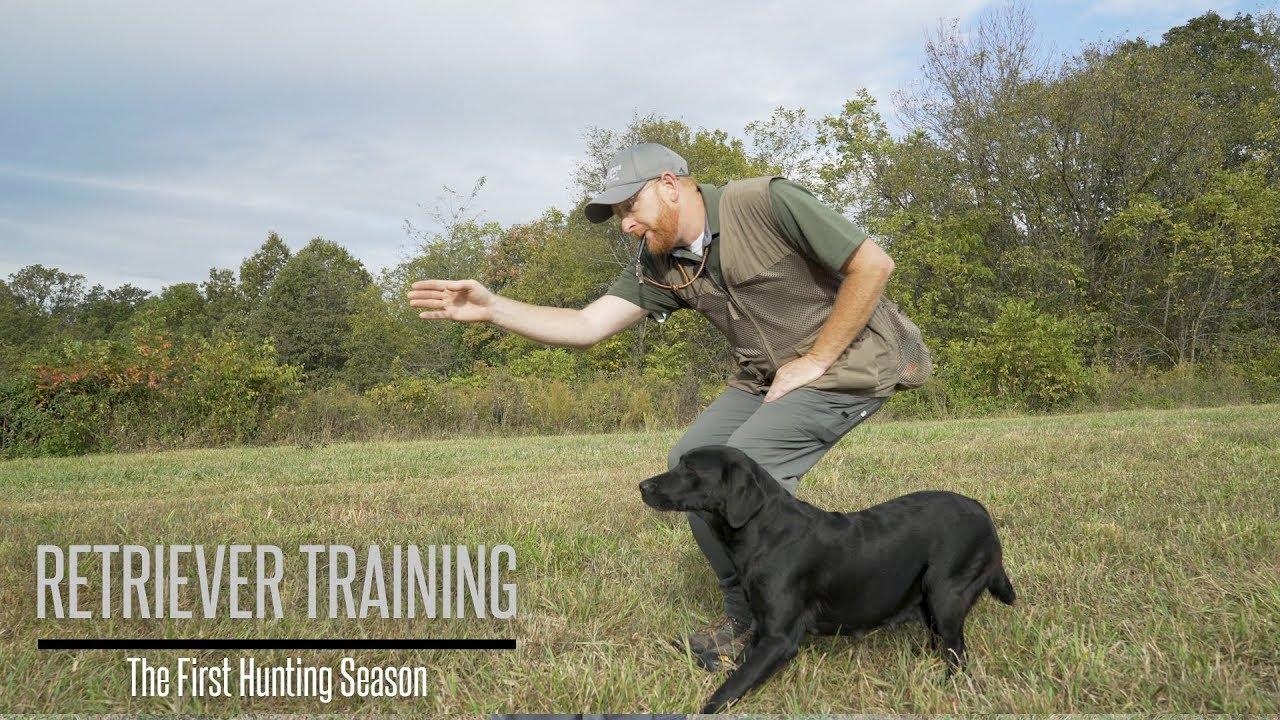 Labrador Retriever Training