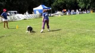 SKYHOUNDZ EUROPEAN CHAMPIONSHIP ( Dog Frisbee ) Distance Novice & Team Distance
