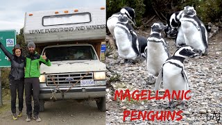 MAGELLANIC PENGUINS EXPEDITION / TRUCK CAMPER Dirt Road to Cabo Virgenes Argentina