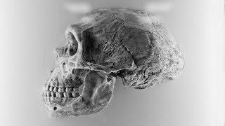 Practical Importance Of Human Evolution - Introduction - Evolution & Scottish Pudding??