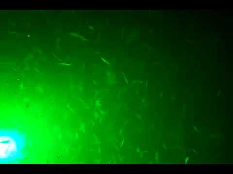 green led fishing lights on lake belton. - youtube, Reel Combo