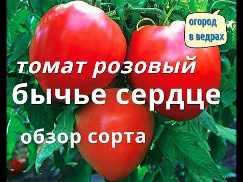 Супер томат Бычье сердце розовый. Обзор сорта .