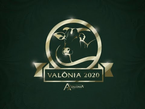 Lote 01   Calabria FIV da Valônia   JAA 6736 Copy