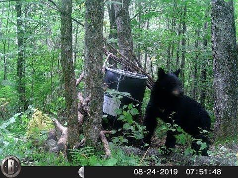 2019 MN Bear Baiting