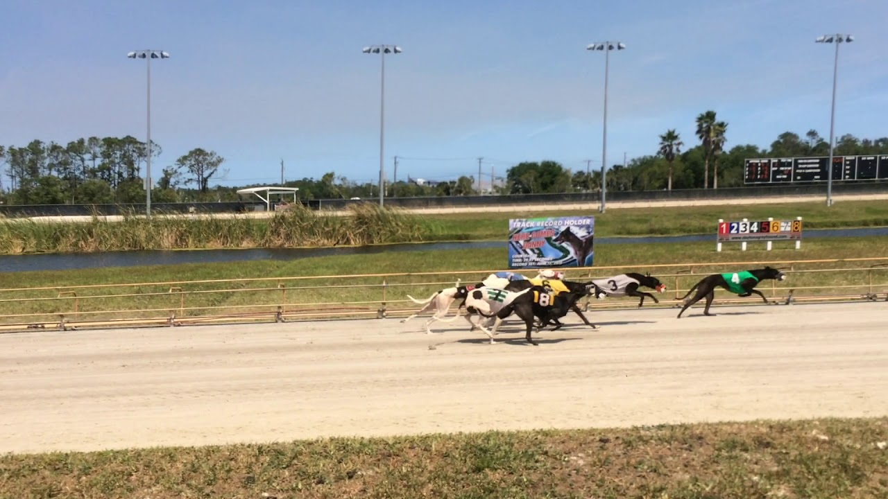 Daytona Dog Track >> Daytona Beach Greyhound Racing Club