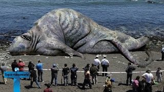 Top 10 Largest Animals In The World Ever Recorded   Biggest Animals of All Time