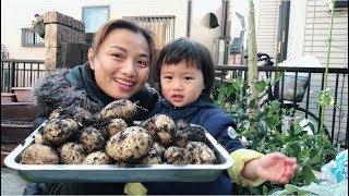 🇯🇵Hai mẹ con đi thu hoạch Khoai Lang Tây - Cuộc sống ở Nhật #90