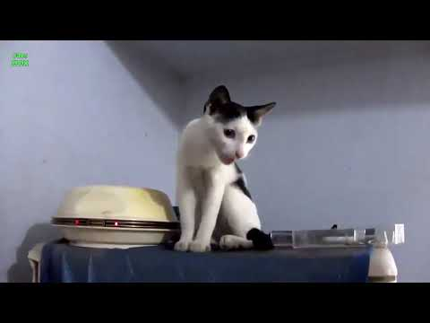 Cats And Funny  Kittens  Compilation HD