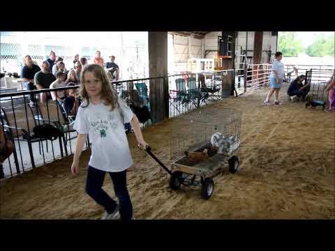 2019 Huntington Co 4-H Fair Videos