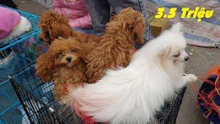 Chợ chó mèo cảnh lớn nhất Việt Nam tạm dừng hoạt động