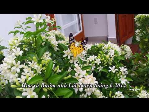 Hoa Và Bướm Vườn Nhà - Bình Nhậm - Thuận An - Bình Dương