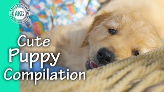 Cute Puppy Compilation
