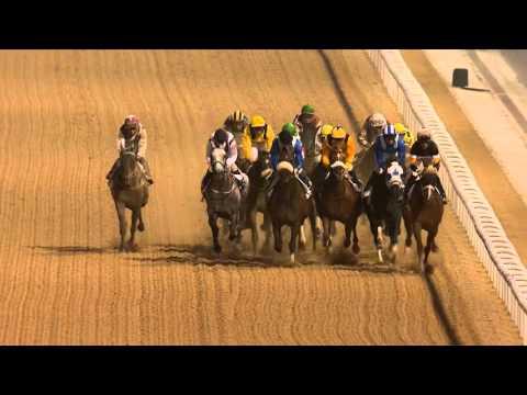 Meydan Racecourse, 13 February 2016 - Race 5 - Container Terminal Handicap