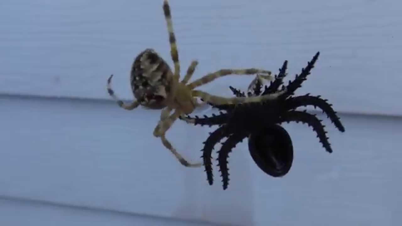 real spider attacks halloween