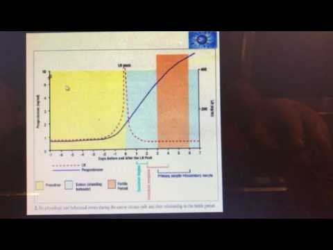 Progesterone levels and breeding dogs