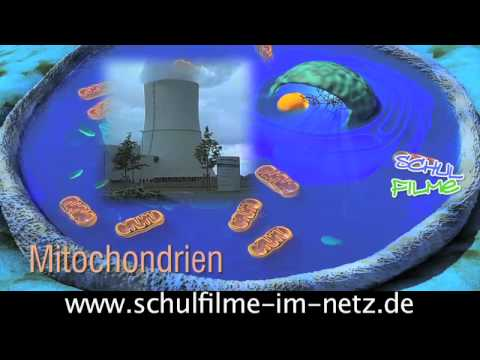 Die Zelle - Schulfilm Biologie - YouTube