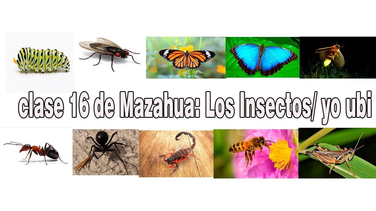"""CLASE DE MAZAHUA: Clase 16 Los Insectos """"Ye Ubi"""""""