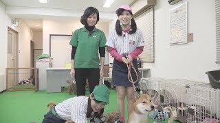 【犬の暮らし】 愛犬の保育園をはじめ、トリミングにペットホテルなど、...