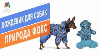 Дождевик для собак Природа Фокс | Обзор дождевика для собак Природа Фокс