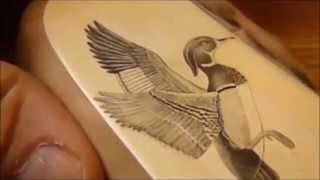Scrimshaw Demo - Wood Duck