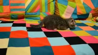 cat and a wedding ring (кот и свадебное кольцо)