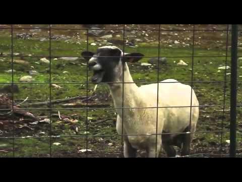 sjove geder