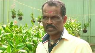 Arya Orchids -  Orchid Nursery & Farm in Kerala