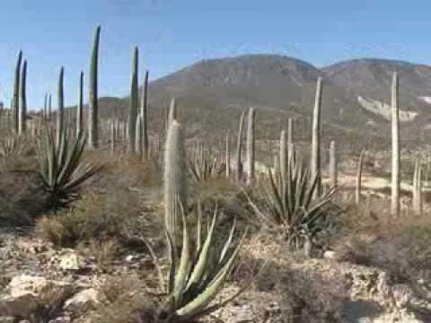 Reserva de la biósfera Tehuacán-Cuicatlán. Área natural protegida. - YouTube 8e1e965fe7877