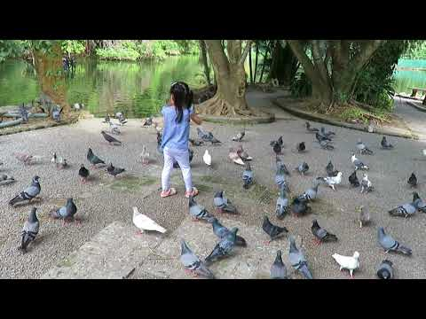 Pigeon Island at Wat Umon Chiang Mai Thailand (2 of 2)