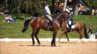 Isabell Werth Schooling Stand By Me at 2017 Pferd International