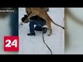 Лев напал на подростка в Липецкой области
