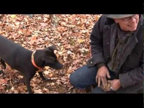 Iron ore sniffing dog