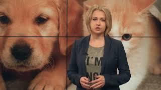 Как защищают права животных в разных странах мира?