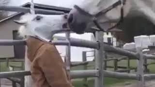 Antara kuda dan manusia.....